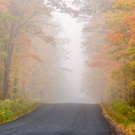 Foggy-Fall-Road